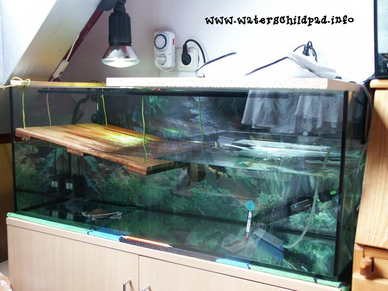 aquarium inrichten tips